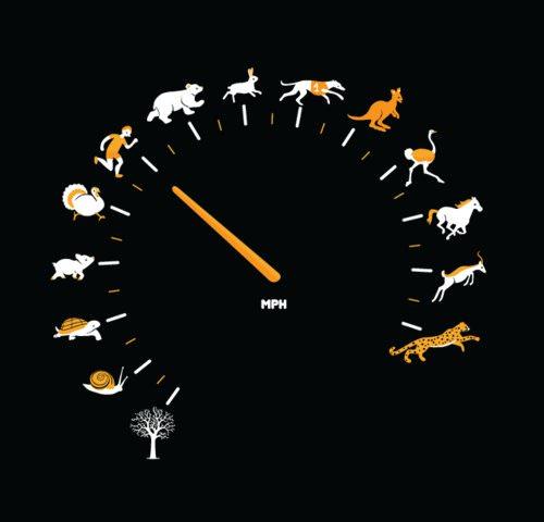 Top Speeds: How do horses stack up? - Dallas Equestrian Center