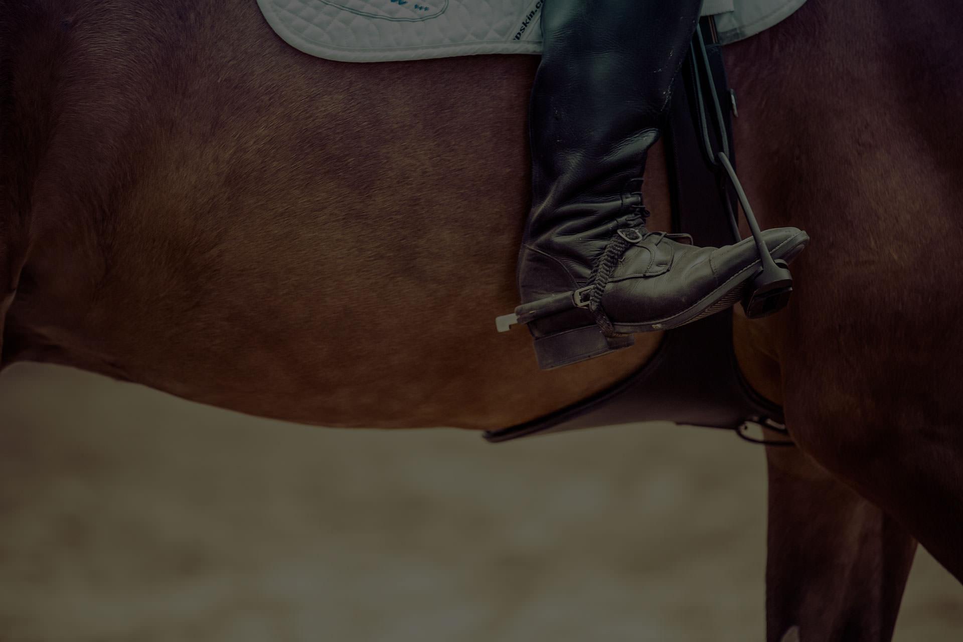 Dallas Equestrian Center