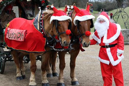 Horses In The Christmas Spirit Dallas Equestrian Center